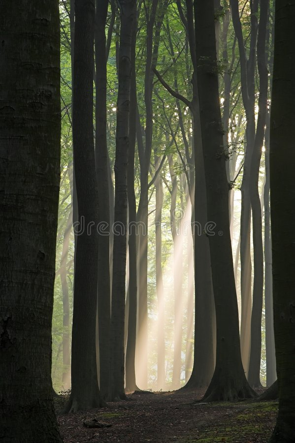 Free Light At The End Of Tunnel Stock Image - 275001