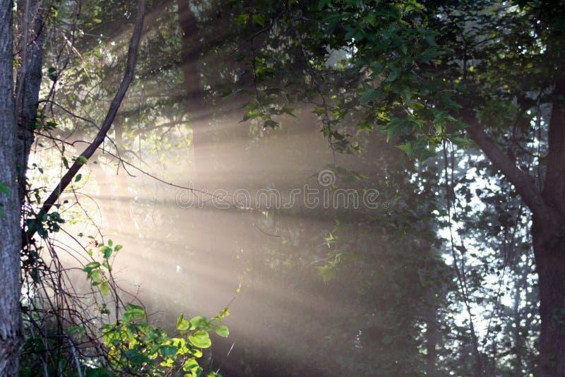 Light beam 3. Sun light shining throw the forest royalty free stock image