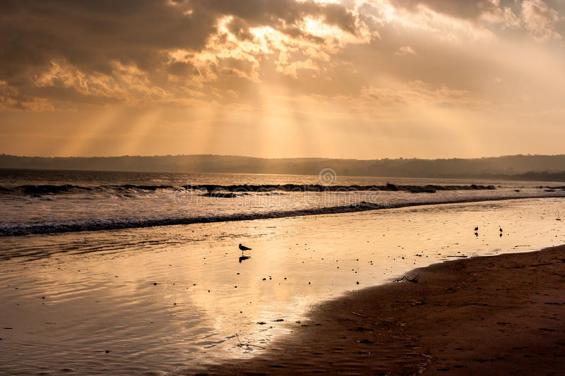 Download Light beam on beach stock photo. Image of light, gold - 27588556