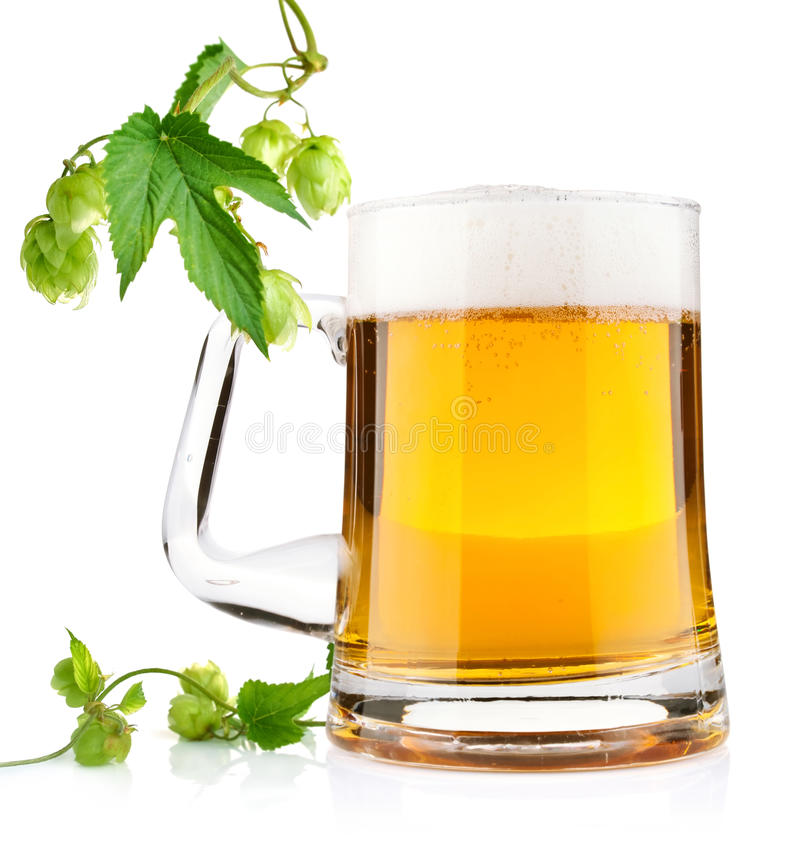 Light beer with aromatic hop royalty free stock images