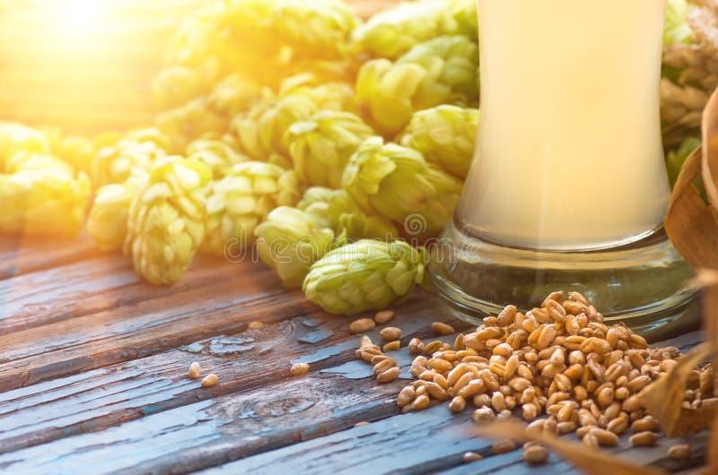 Light beer, malt, hops, barley ears on the table stock photo