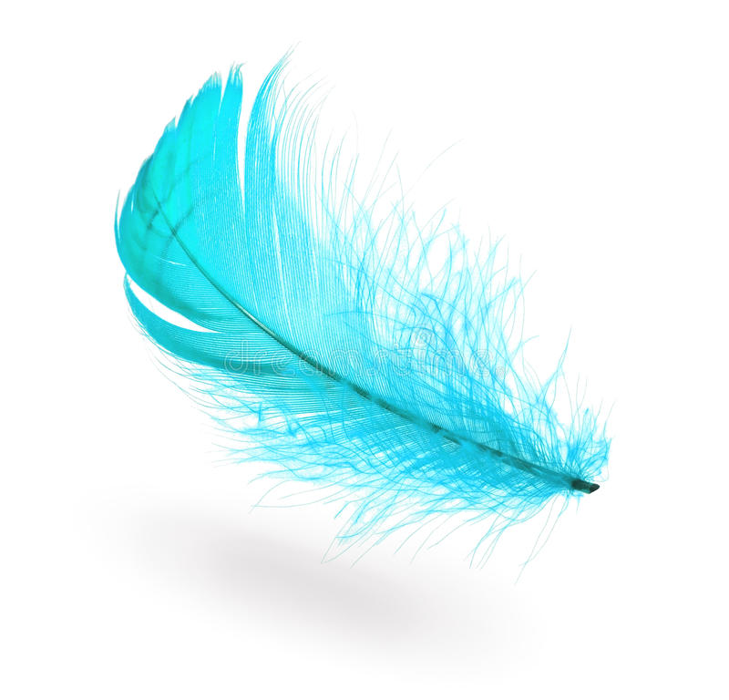 Light blue feather stock photography
