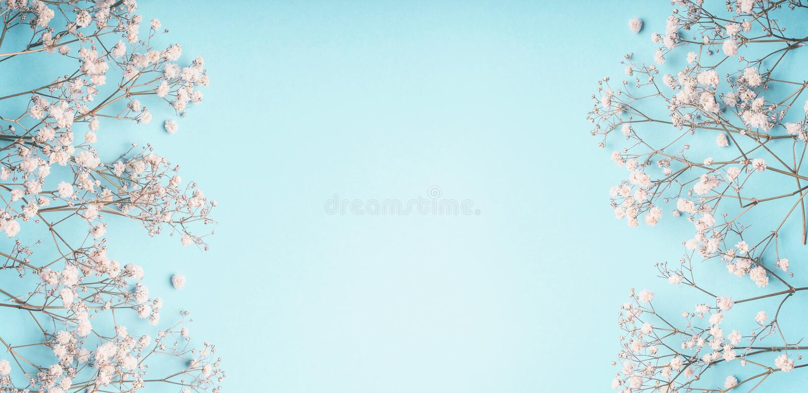 Light blue floral background frame with white Gypsophila flowers. Baby`s-breath flowers on pastel. Blue layout , banner stock image