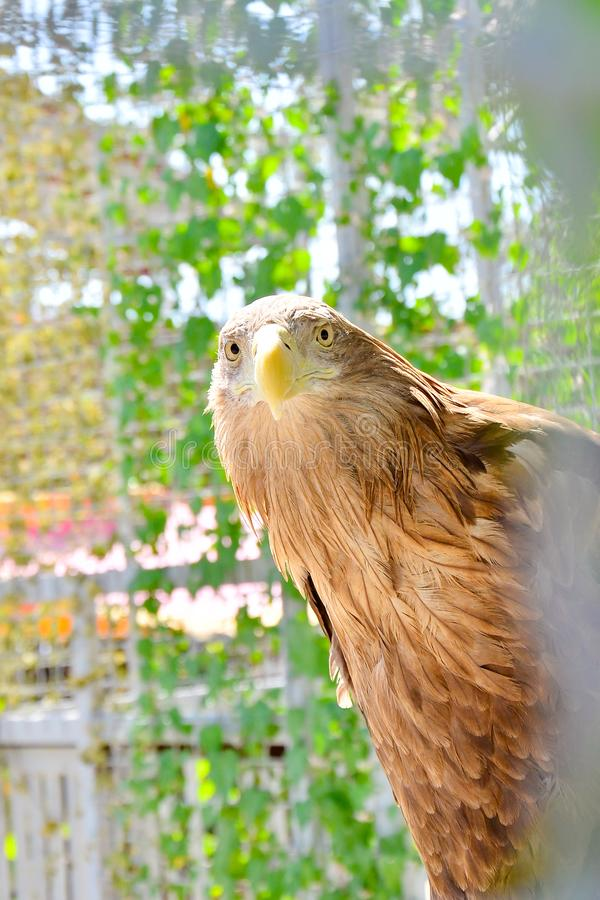 Light brown eagle on a background of green plants royalty free stock photos