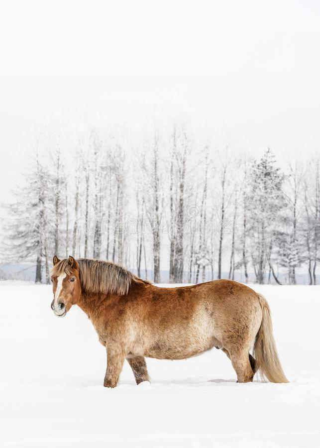 Light brown horse wading through snow on field in winter, blurred trees in background, vertical photo from side, with space for stock photography