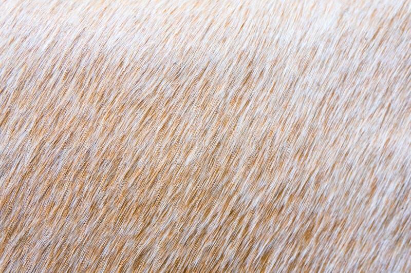 Mink fur alpha. Light brown mink fur texture royalty free stock photography