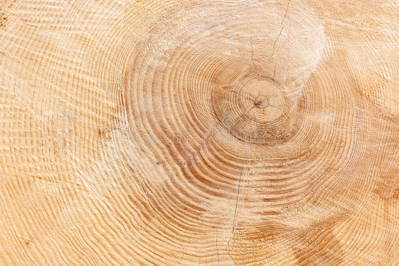 Light brown, slightly cracked wood texture royalty free stock images