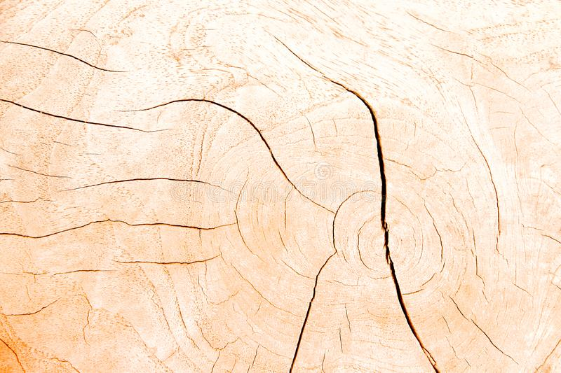 Light brown wood cross section rings nature texture with line cracked patterns of tree trunk background. Close up Light brown wood cross section rings nature royalty free stock photography