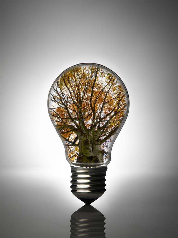 Download Light bulb stock image. Image of intelligence, engineering - 10786797
