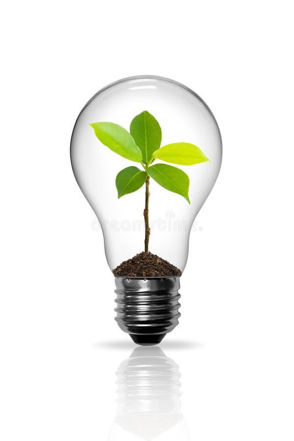 Free Light Bulb Royalty Free Stock Photo - 19635755