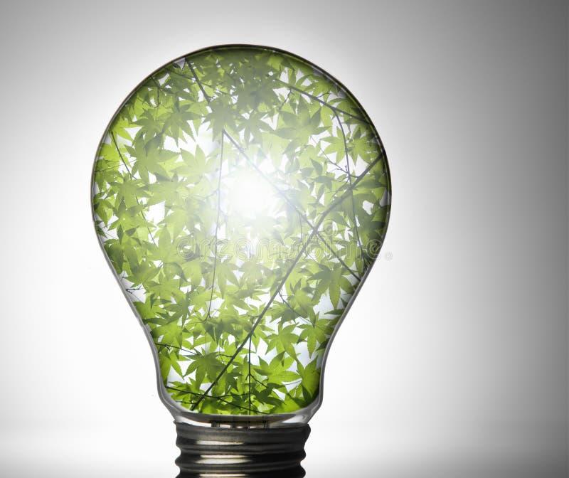 Light Bulb Free Stock Photo