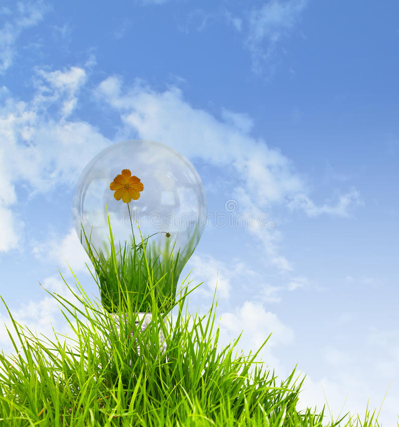 Light Bulb With Beautiful Flower Inside Royalty Free Stock Photo