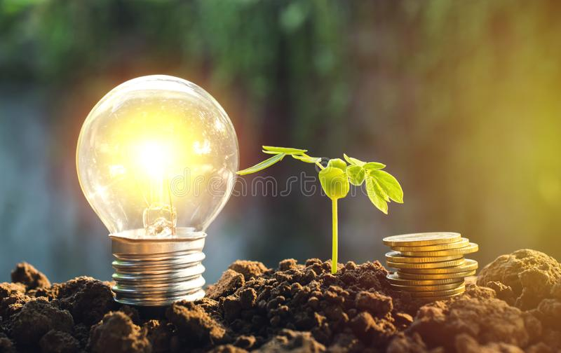 Light bulb with coins beside and young plant for saving money,financial,business or energy concept put on the soil. stock images
