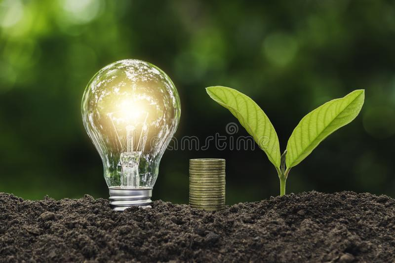 Light bulb with coins and young plant  for saving money,financial,business or energy concept put on the soil in soft green nature. Light bulb with coins and royalty free stock photography