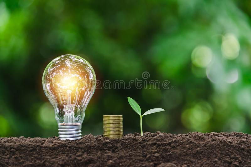 Light bulb with coins and young plant  for saving money,financial,business or energy concept put on the soil in soft green nature. Background royalty free stock image