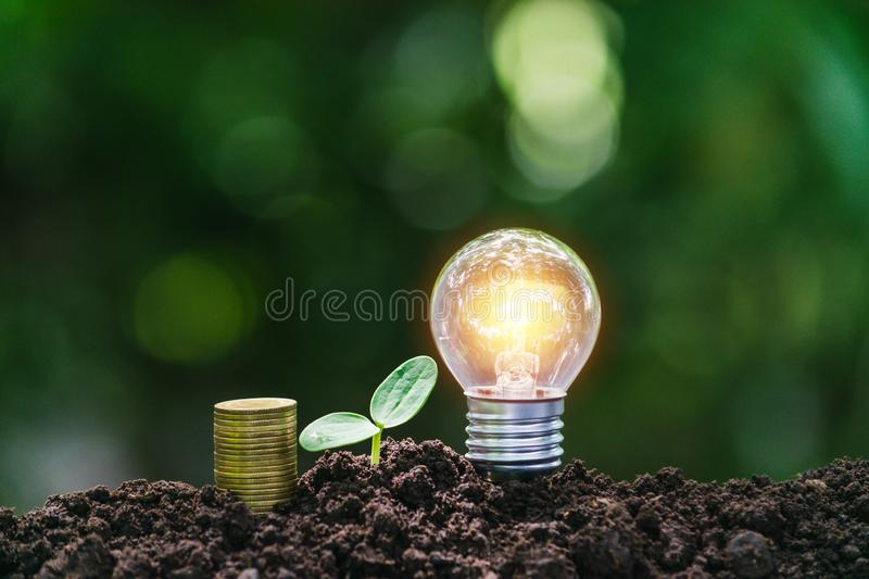 Light bulb with coins and young plant  for saving money,financial,business or energy concept put on the soil in soft green nature. Light bulb with coins and royalty free stock photo