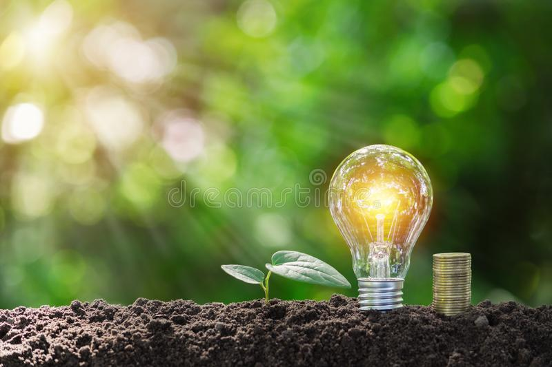 Light bulb with coins beside and young plant on top concept put on the soil in soft green nature background.  stock image