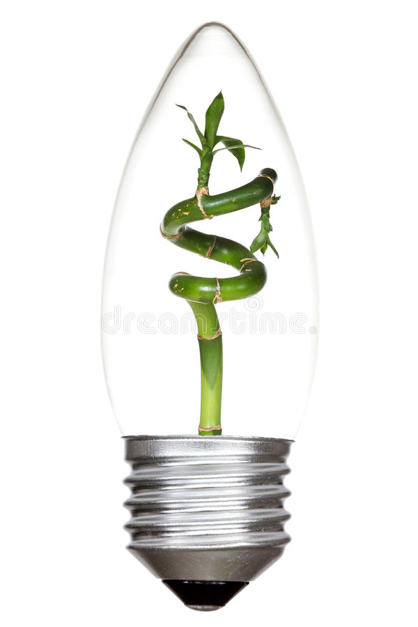 Download Light Bulb With Green Bamboo Inside Stock Image - Image: 35177687