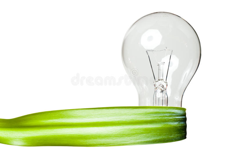A light bulb with a green leaf ribbon stock photo