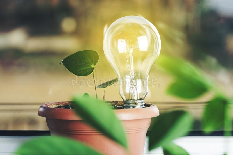Light bulb on plant royalty free stock images
