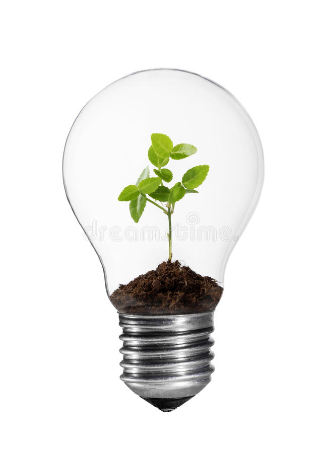 Light bulb with green plant. Light bulb with small green plant stock images