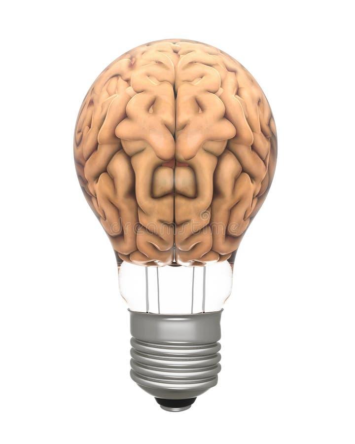 Light Bulb and Human Brain stock illustration. Illustration of ...