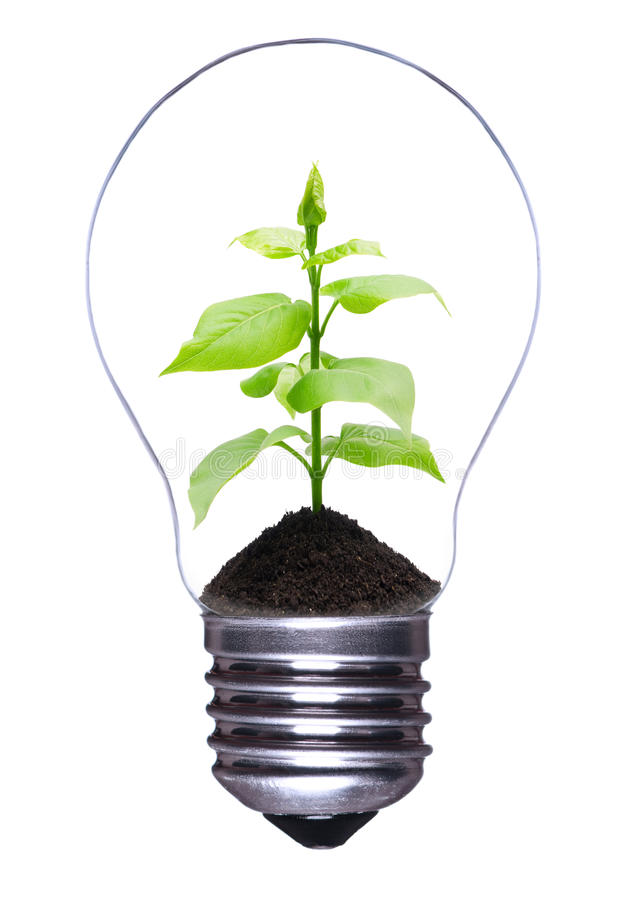Light bulb with plant. Light bulb with a growing plant inside isolated on white background royalty free stock photo