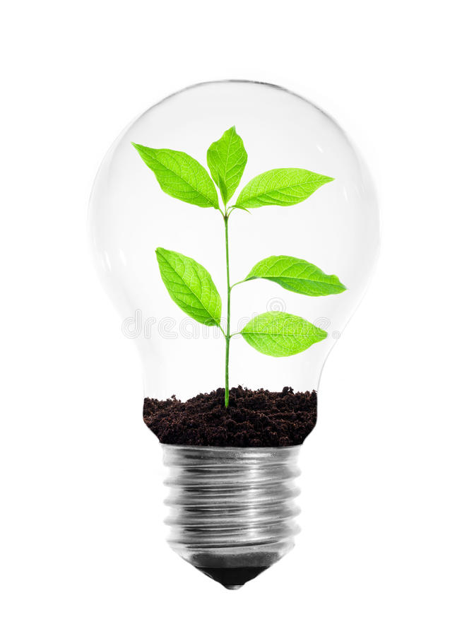 Light Bulb With A Growing Plant Inside Isolated On A White Background