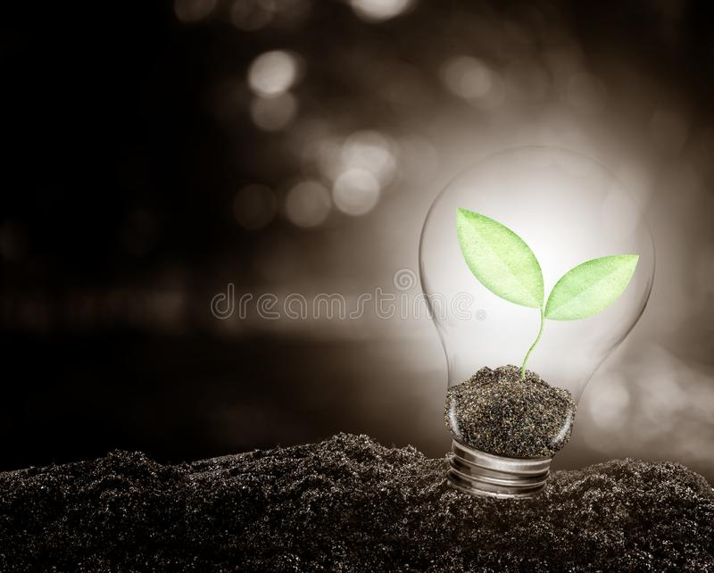 Light bulb with plant growing inside on soil ecology. Light bulb with plant growing inside on soil ecology, Concept of conserve environment stock photography