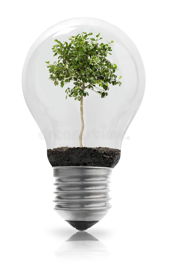 Light bulb with plant. On white royalty free stock images