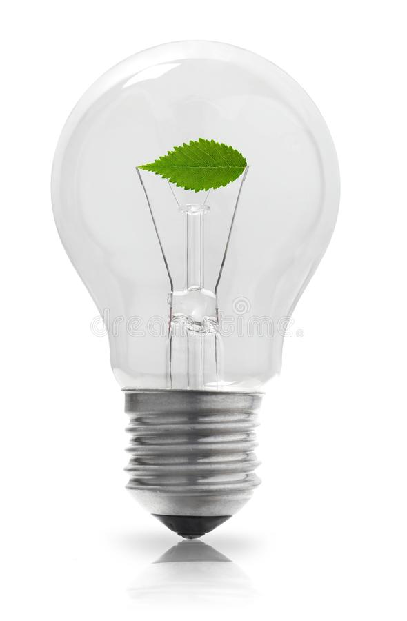 Light bulb with plant. Light bulb and plant on white background royalty free stock photos