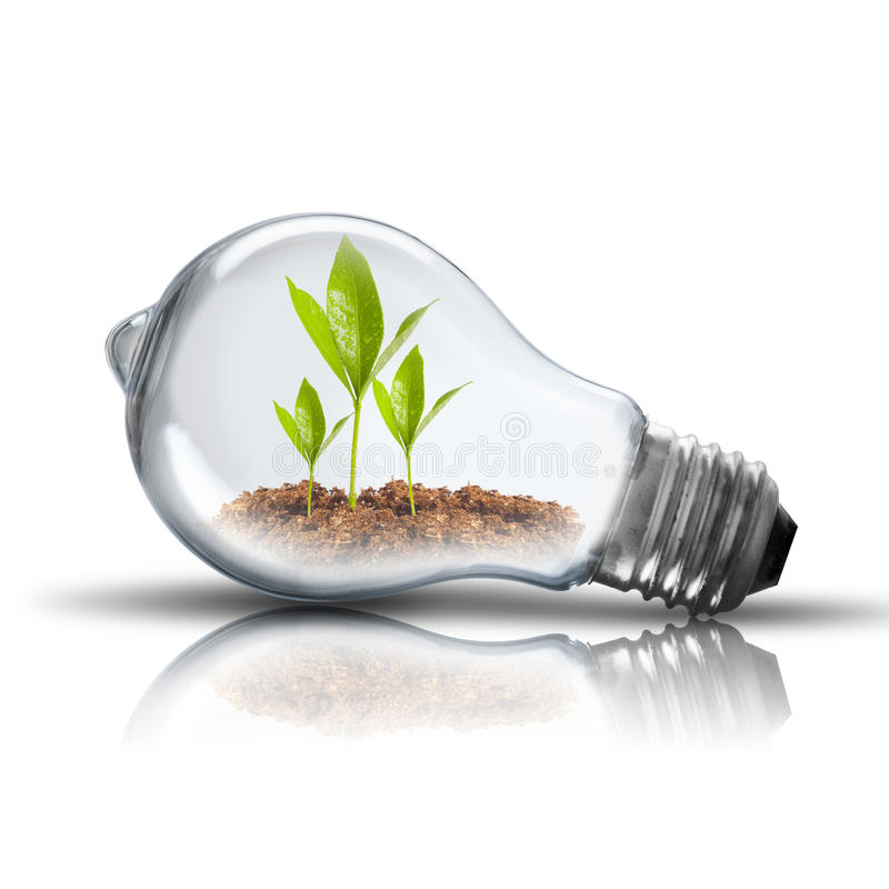 Light Bulb with plant. Light Bulb with soil and green plant sprout inside growing royalty free stock photo