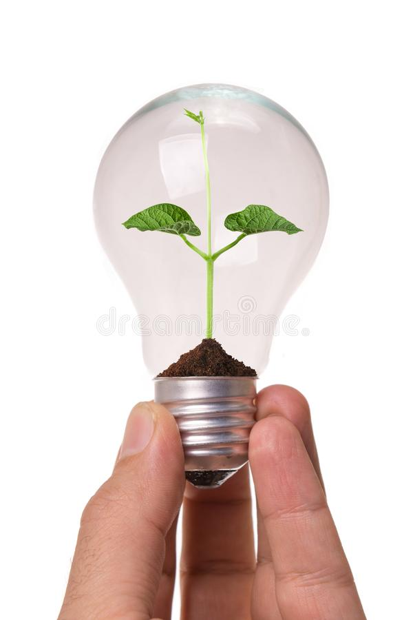 Light Bulb with soil and green plant. Businessman hold Light Bulb with soil and green plant sprout inside royalty free stock image