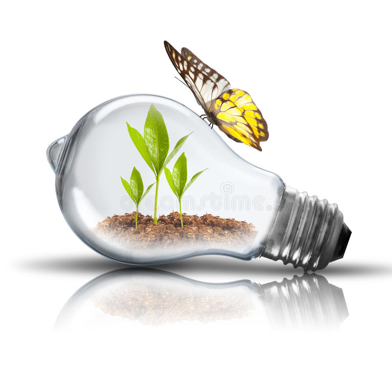 Light Bulb with soil and green plant sprout inside and butterfly. Light Bulb with soil and green plant sprout inside growing. On White Background stock photography