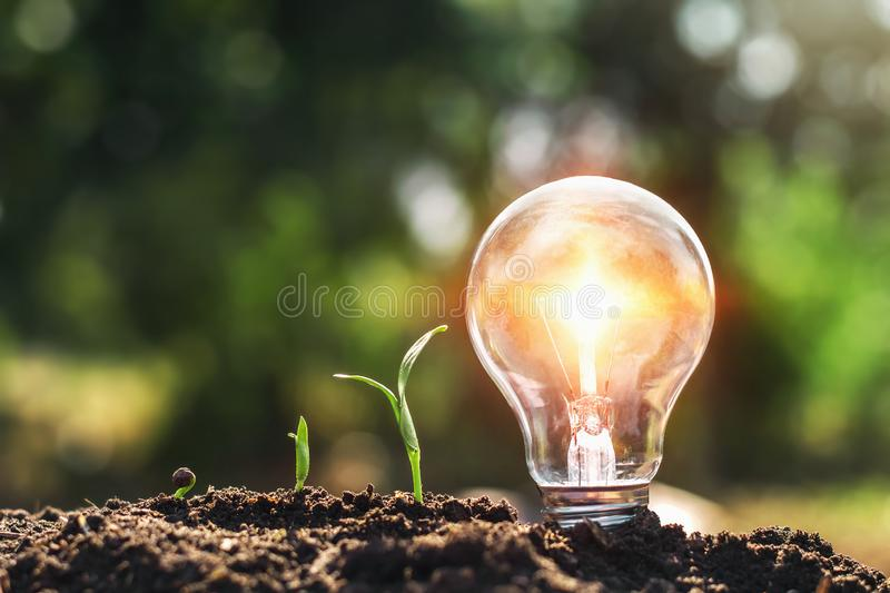light bulb on soil and young plant growing. concept saving energy royalty free stock photography