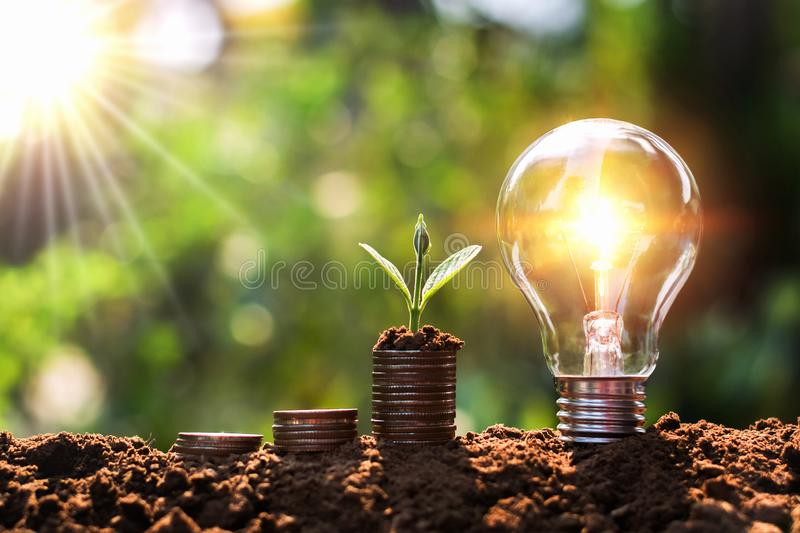 Light bulb on soil with young plant growing on money stack. saving finance and energy. Concept royalty free stock photos