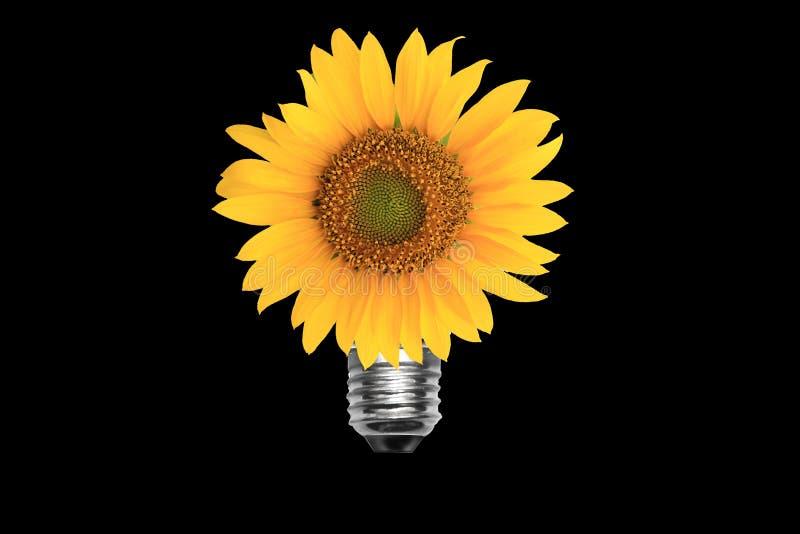 Light bulb sun flower. Light bulb plant idea save earth care saving energy power nature tree isolated idea electric green gogreen royalty free stock photos