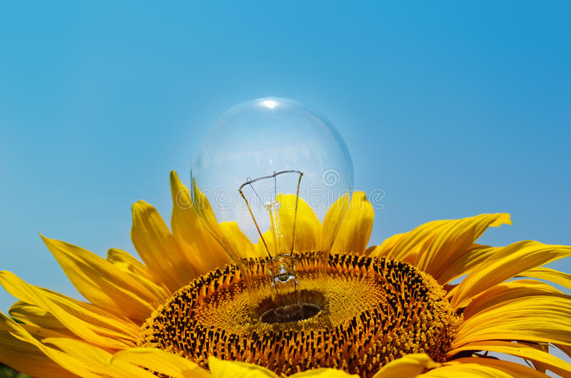 Light Bulb In Sunflower Royalty Free Stock Photography