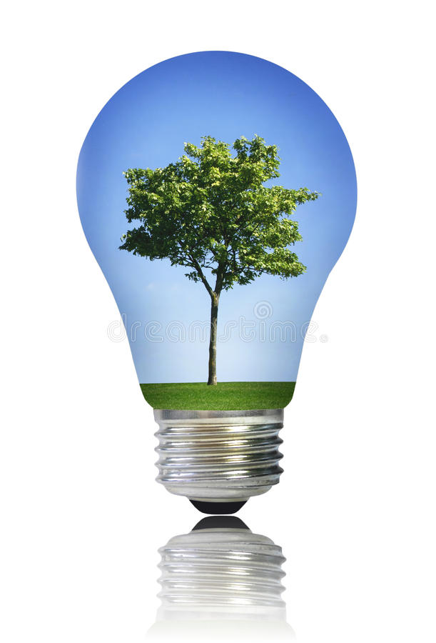Light bulb with tree stock photography