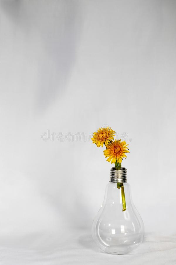 Light Bulb Vase and Dandelions royalty free stock images