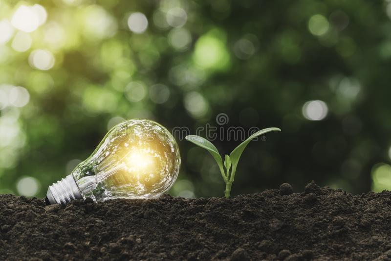 Light bulb with  young plant for energy concept put on the soil in soft green nature background. Light bulb with young plant for energy concept put on the soil royalty free stock images