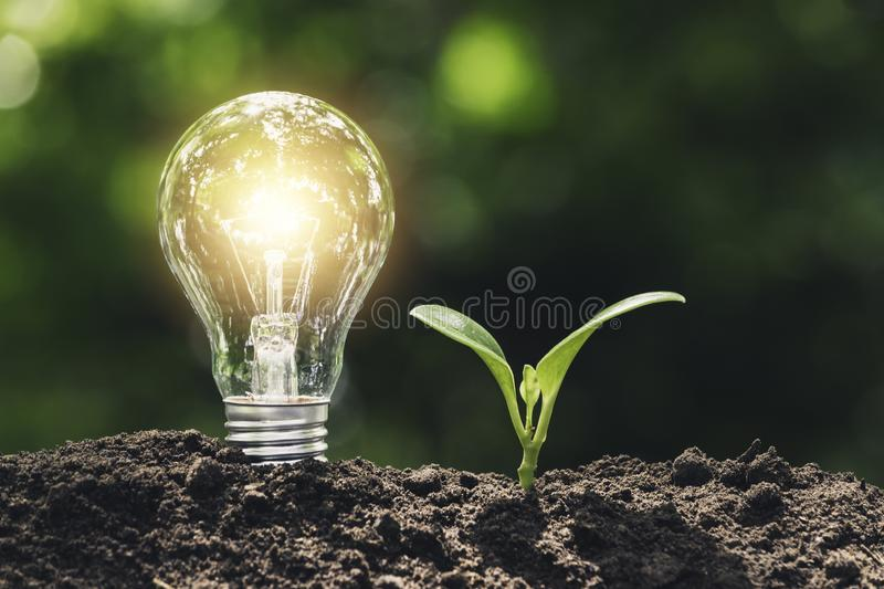 Light bulb with  young plant for energy concept put on the soil in soft green nature background.  stock photos