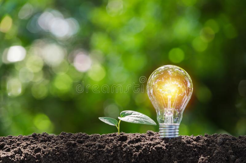 Light bulb with  young plant for energy concept put on the soil in soft green nature background. Light bulb with young plant for energy concept put on the soil royalty free stock photo