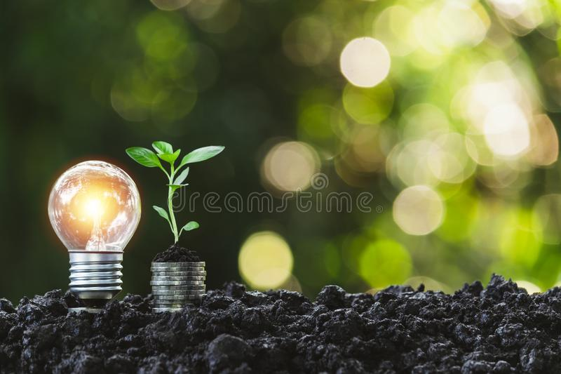 Light bulb with  young plant for energy concept put on the soil in soft green nature background. Light bulb with young plant for energy concept put on the soil royalty free stock image