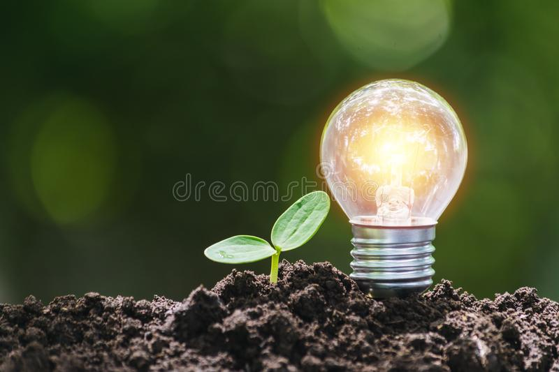 Light bulb with young plant  for saving money,financial,business or energy concept put on the soil in soft green nature background.  stock photography