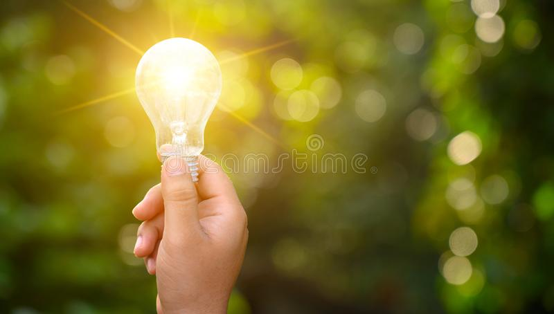 Light bulbs shining on the green grass, renewable energy and nature conservation concepts royalty free stock photo