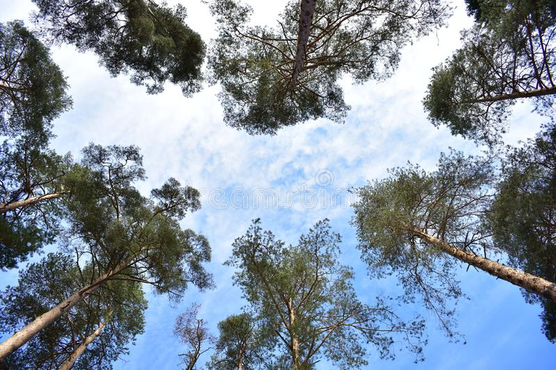 Light coniferous forest openwork crowns and a relatively small canopy closeness miss more precipitation. And light royalty free stock photos