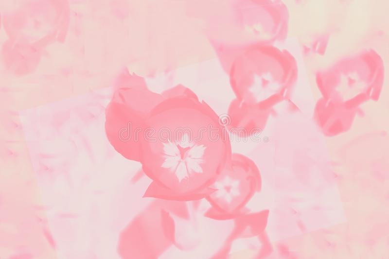 Light coral color gradient background with floral pattern. Abstract background royalty free stock photo