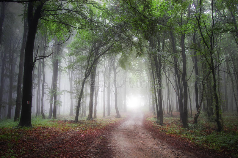 Download Light At The End Of A Road Through A Green Forest Stock Photo - Image: 22820664
