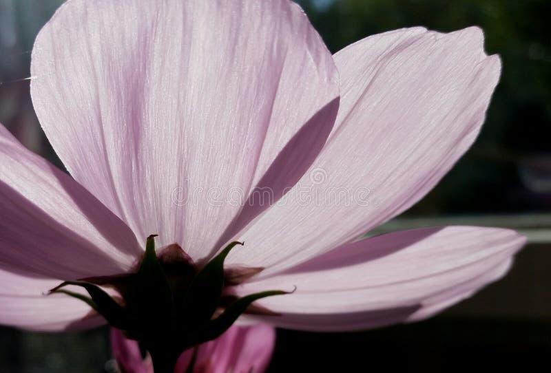 Light flower stock photography